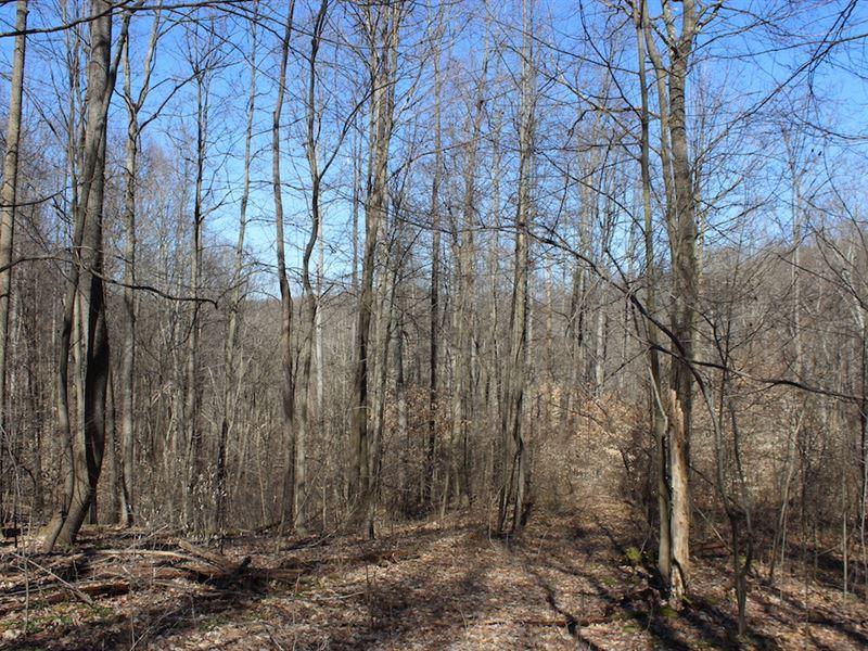 Beagle Club Rd - 16 Acres : Scio : Harrison County : Ohio