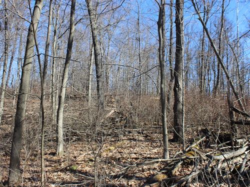 Beagle Club Rd - 5 Acres : Scio : Harrison County : Ohio