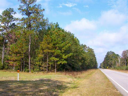 50 Ac Tract 1 Saratoga Timberlands : Saratoga : Hardin County : Texas