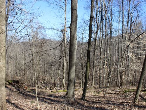 Beagle Club Rd, 11 Acres : Scio : Harrison County : Ohio