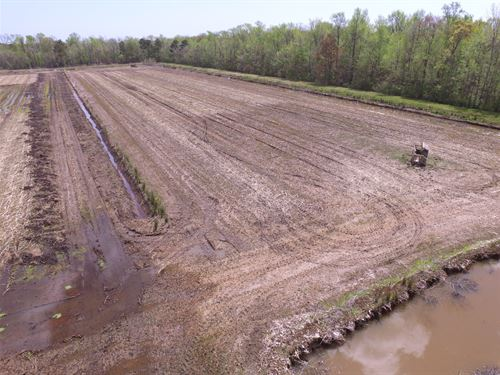Waterfowl Impoundments / Farm Land : Englehard : Hyde County : North Carolina