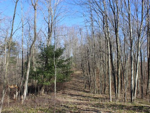 Beagle Club Rd, 20 Acres : Scio : Harrison County : Ohio