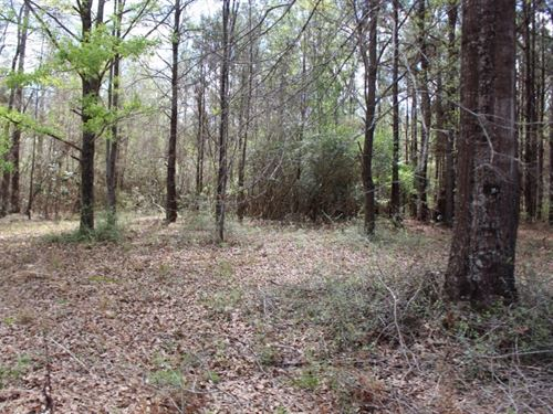 100 Acres In Pearl River County, Ms : Poplarville : Pearl River County : Mississippi