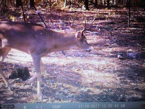 Private Deer & Turkey Farm : Reynolds : Macon County : Georgia