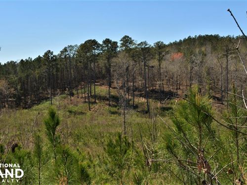 Oak Grove Road Timber Investment an : Fayette : Alabama