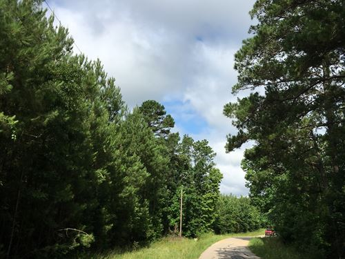 8 Acres Wheatfield Branch : Oakhurst : San Jacinto County : Texas