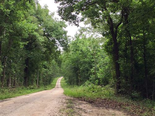 181 Acres On Stephen Creek : Coldspring :  County : Texas