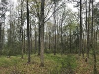 Saccojawea Hunting Tract : Citronelle : Washington County : Alabama