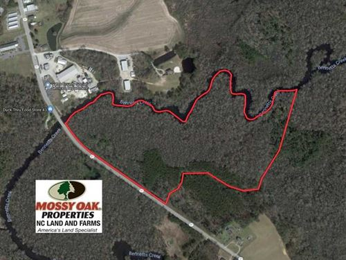 43.7 Acres of Hunting Land For Sal : Gatesville : Gates County : North Carolina