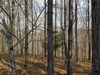 5.2+/- Acres Near Franklin Forest : South Pittsburg : Marion County : Tennessee