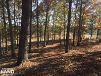 Sunset Road Hunting And Timber Inve : Hodges : Franklin County : Alabama