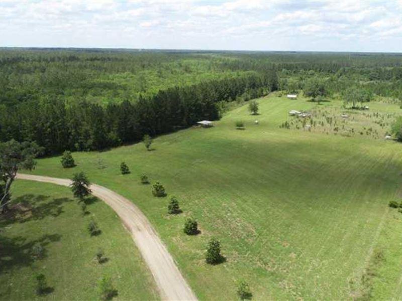 Farm With Pasture And Creek Bottom : Folkston : Charlton County : Georgia