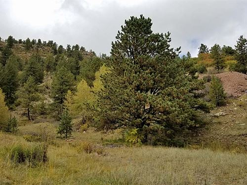 20 Acres Only $39,900 : Cripple Creek : Teller County : Colorado