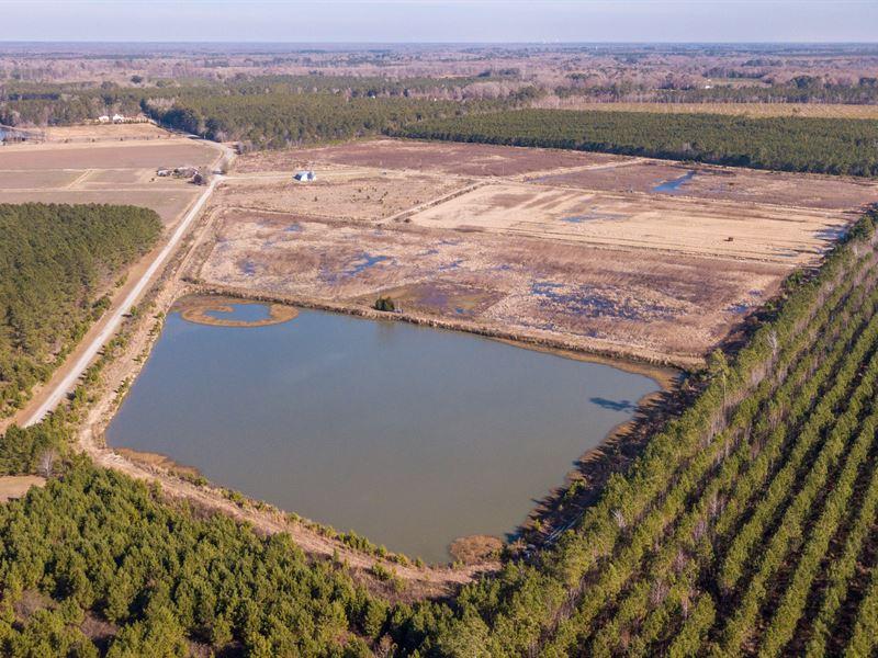 Awesome Value On Duck Impoundments : Williamston : Martin County : North Carolina