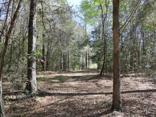 2 Acres In Greene County, Ms : State Line : Greene County : Mississippi