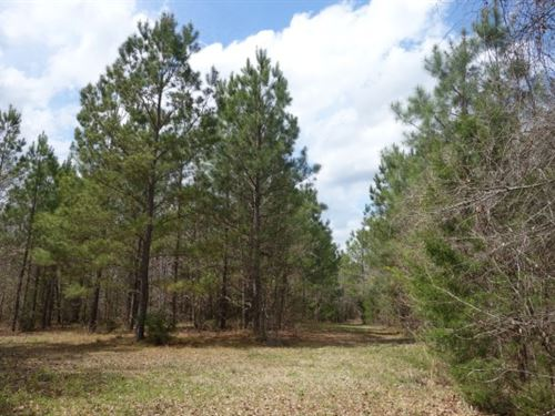 72 Acres, Fairfield County, Sc : Winnsboro : Fairfield County : South Carolina