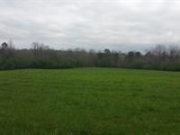 Beautiful Tract In Franklin, Al : Hackleburg : Franklin County : Alabama