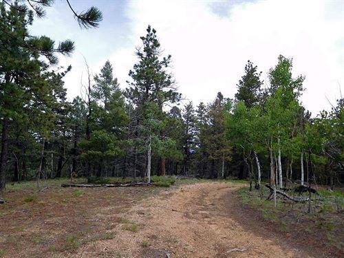 10 Acres Near Woodland Park : Woodland Park : Teller County : Colorado