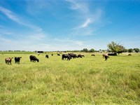 Cattle Ranch On Large Acreage : Wolfe City : Hunt County : Texas