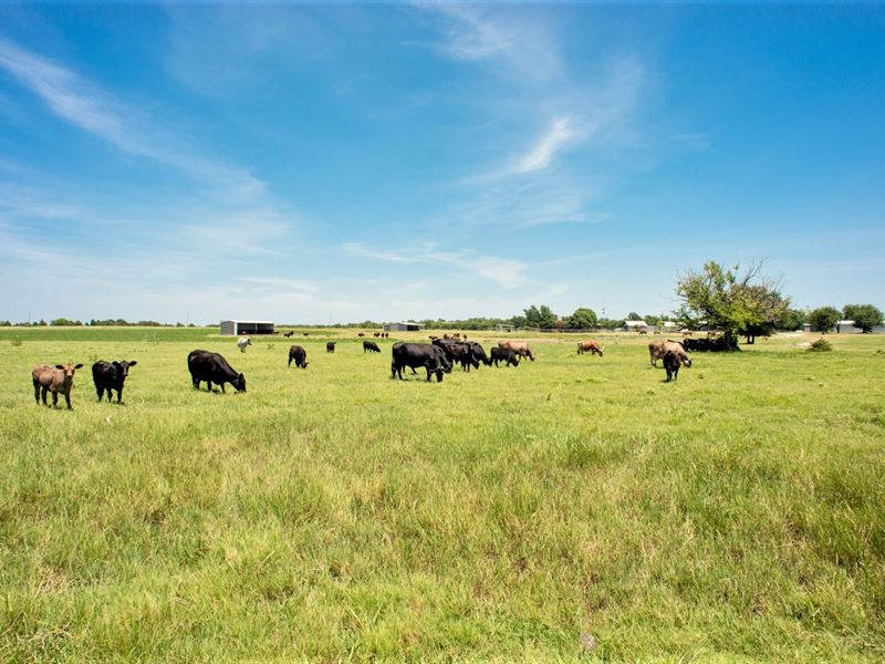 Cattle Ranch On Large Acreage : Land for Sale : Wolfe City