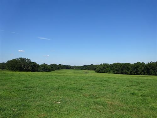 450 Acres - Greenville, Fl : Greenville : Madison County : Florida