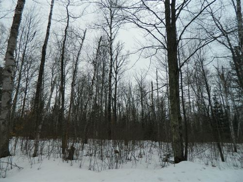 Buildable Lakefront Property : Exeland : Sawyer County : Wisconsin