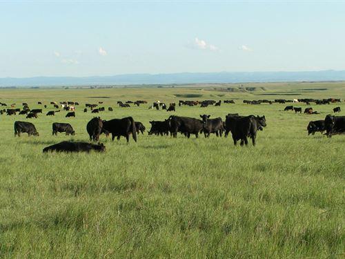 Landmark Ranch : Newell : Butte County : South Dakota