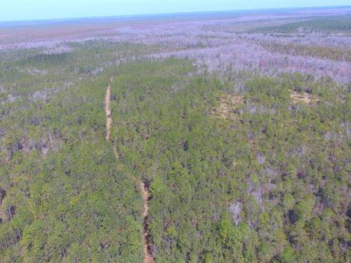 Buckshot Hunting And Timber : Hampstead : Pender County : North Carolina