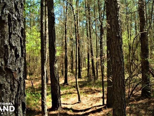 Monmouth Timber Investment And Hunt : Monmouth : Jefferson County : Alabama