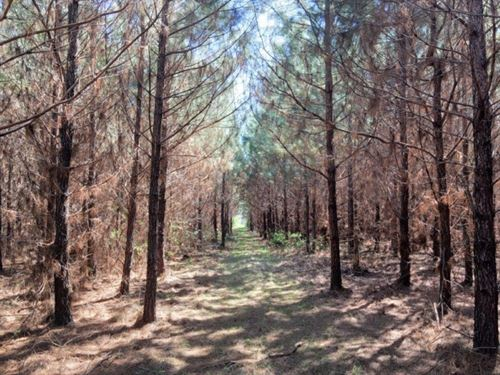 34 Acres In Copiah County In George : Georgetown : Copiah County : Mississippi