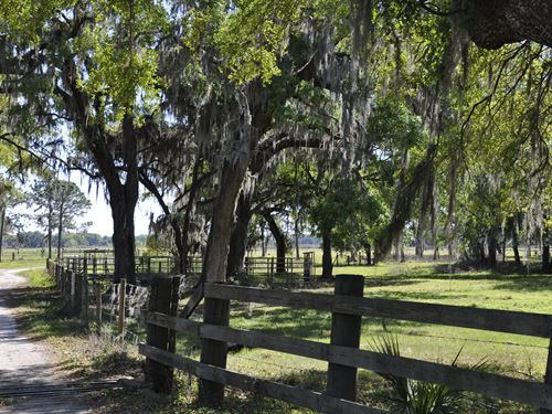 Knights Farm & Ranch In Plant City : Plant City : Hillsborough County : Florida