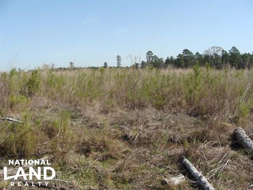 Deer Hunting Tract With Recently Pl : Hermitage : Bradley County : Arkansas