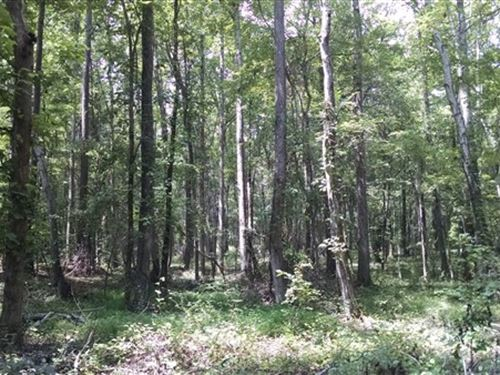 11.47 Acres - Fairfield County, Sc : Ridgeway : Fairfield County : South Carolina