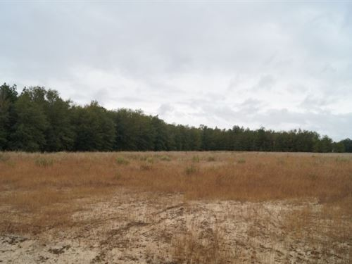 38.1 Acres, Kershaw County, Sc : Bethune : Kershaw County : South Carolina