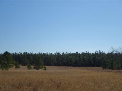 32.27 Acres - Calhoun County, Sc : Cameron : Calhoun County : South Carolina