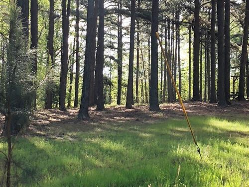 Walter Mayo Road Recreational Tract : Eutaw : Greene County : Alabama
