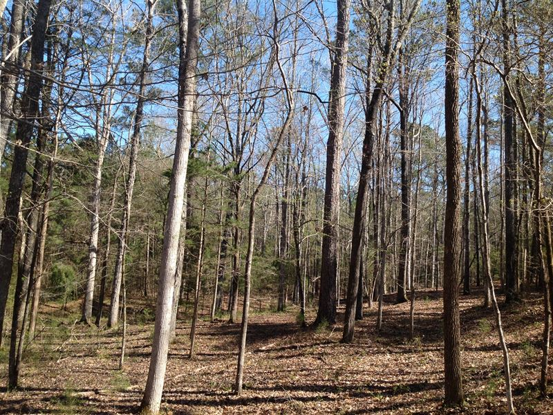 Rice Creek Tract : Marion : Perry County : Alabama