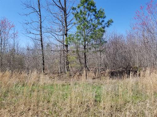 5.5+/- Acres Wooded Lot W/ Electric : South Pittsburg : Marion County : Tennessee