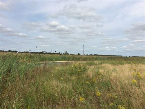 Platte Sloughs, Waterfowl And White : Central City : Merrick County : Nebraska