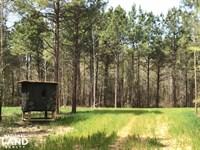 Maple Branch Farms : Brittons Neck : Marion County : South Carolina