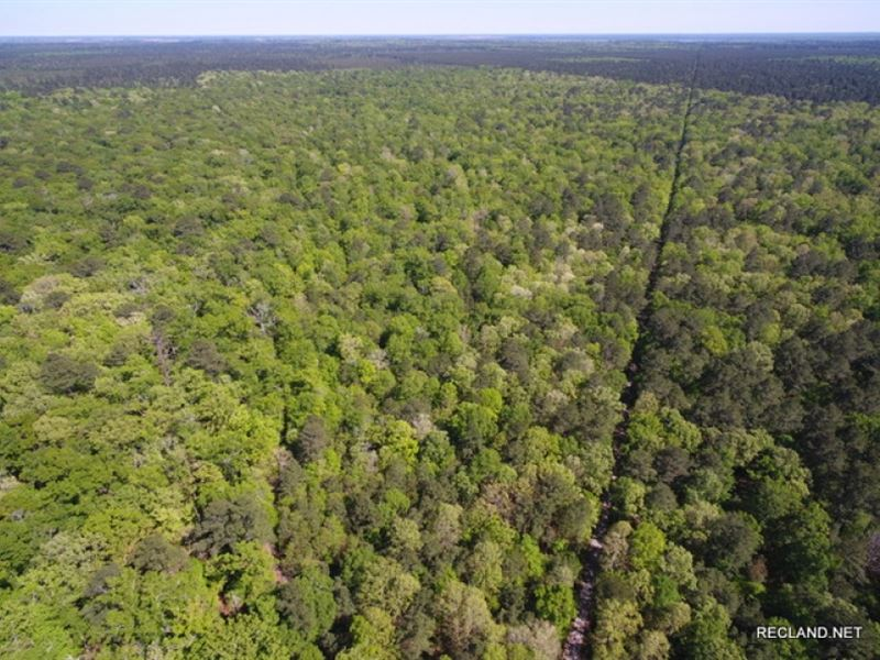 360 Ac, Development OR Large Acrea : Sterlington : Ouachita Parish : Louisiana