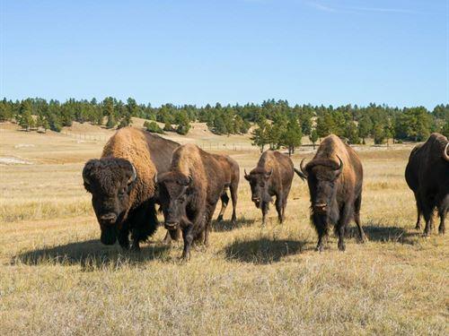 Stone Meadow Guest Ranch : Pringle : Custer County : South Dakota