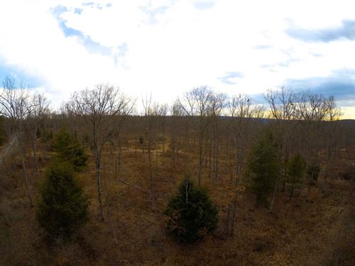 925+/- Of Timberland Acres : Beech Creek : Clinton County : Pennsylvania