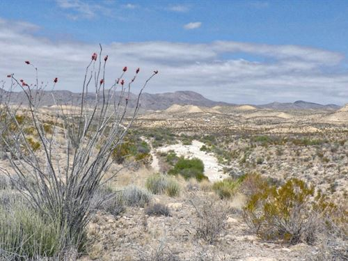40 Acres With A Nice Arroyo : Terlingua : Brewster County : Texas