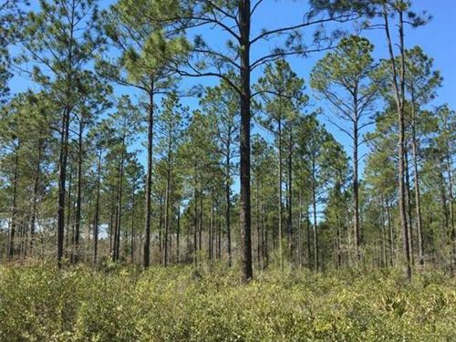 64.5 Acres Timberland / Farmlan : Nicholls : Ware County : Georgia