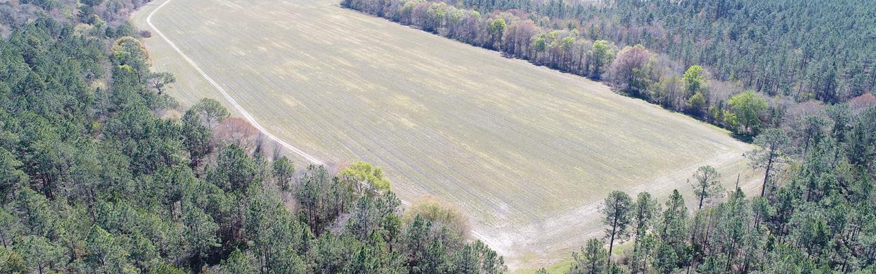 120 Acres Timberland / Farmland : Nicholls : Ware County : Georgia