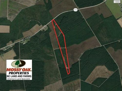 Reduced, 62.82 Acres of Hunting : Willard : Pender County : North Carolina