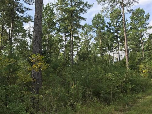 Excellent Timber Tract : Chipley : Washington County : Florida