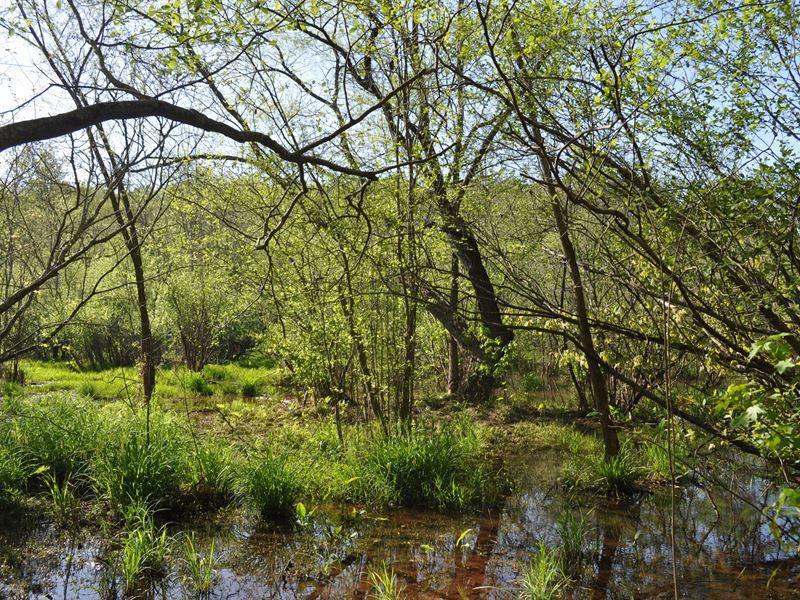 Hawks Creek : Colbert : Oglethorpe County : Georgia