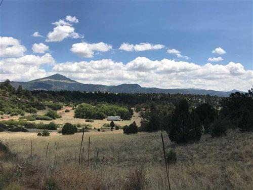 Navajo Mountain Mesa : Florissant : Teller County : Colorado